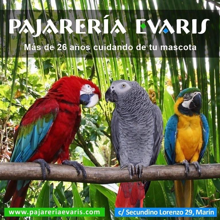 Logotipo Pajarería Evaris